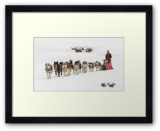 Dog Sledding by Patricia Jacobs DPAGB LRPS BPE4