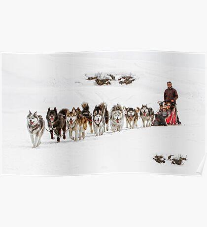 Dog Sledding Poster