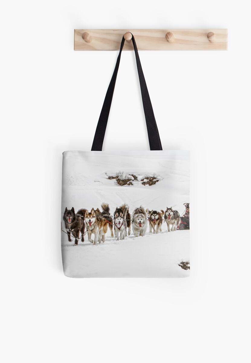 Dog Sledding by Patricia Jacobs DPAGB LRPS BPE4