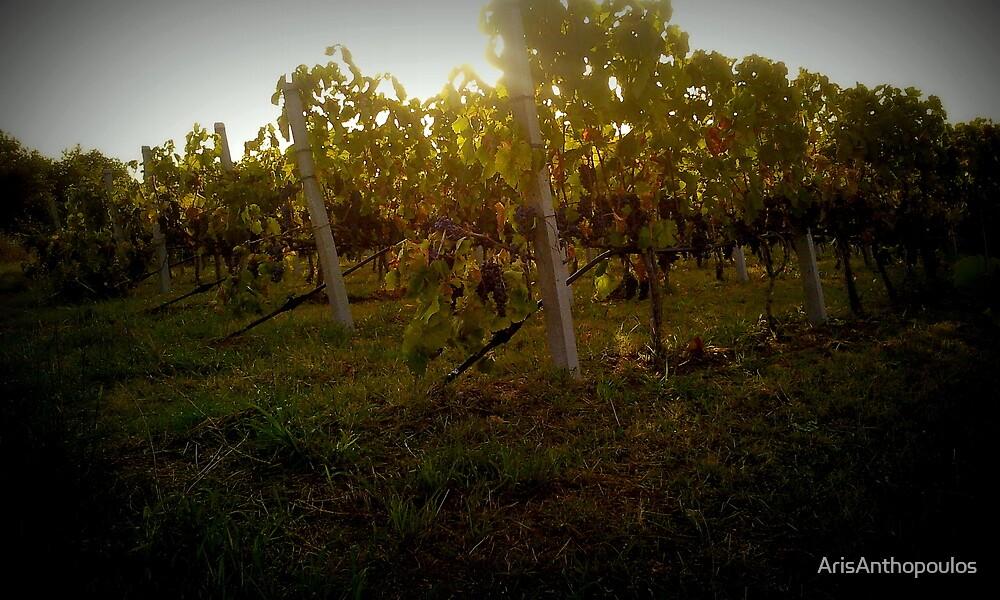 Greek vineyard by ArisAnthopoulos