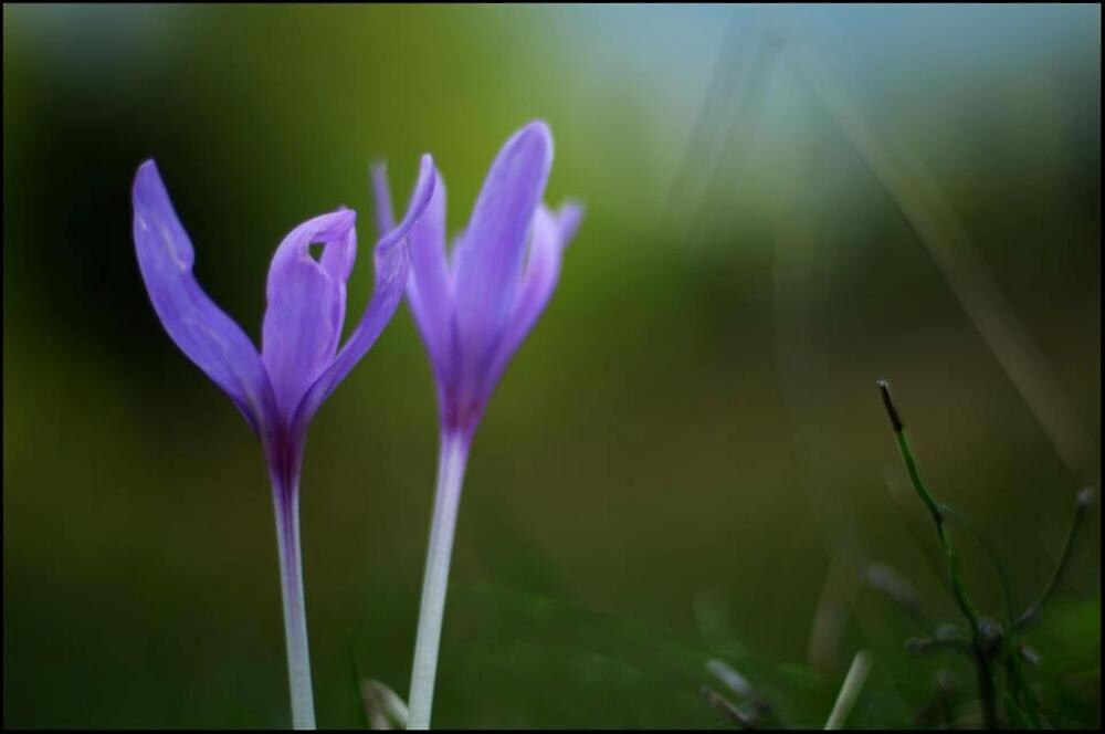 World in Violet by Alimas