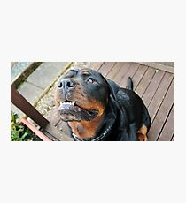 Black & Tan Man Photographic Print