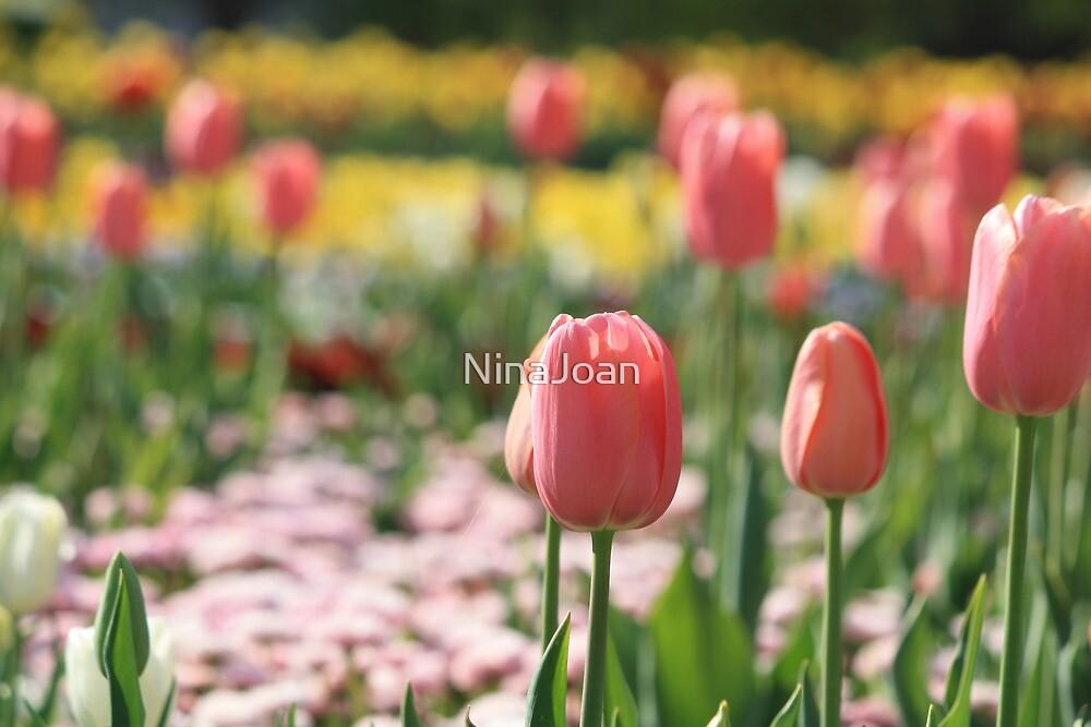 Pink Tulips by NinaJoan