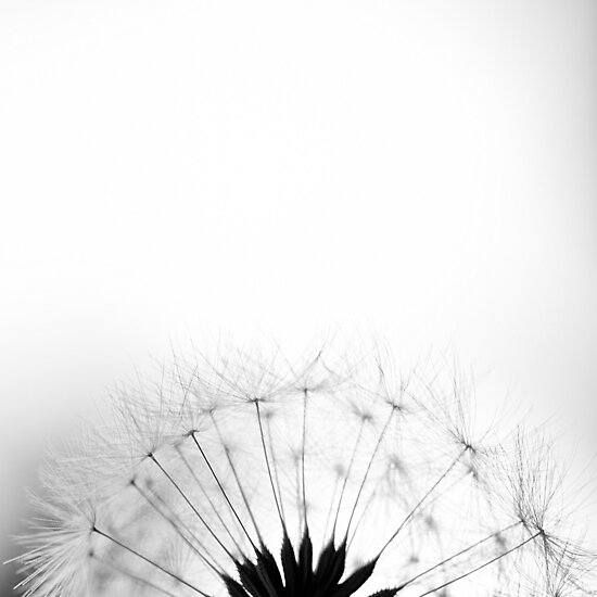 Untitled by anla2011