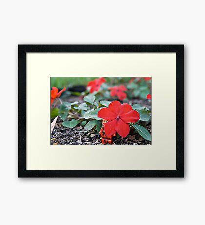 Red Ninja Petals Framed Print