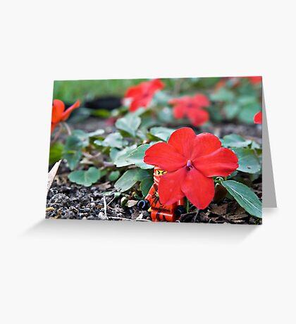 Red Ninja Petals Greeting Card