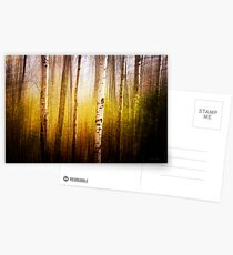 Magic Birch Postcards