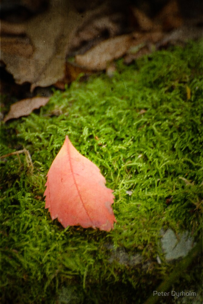 Leaf on bed of green by Peter Dyrholm