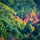 Autumn in the Hills   (EH) by Ray Warren