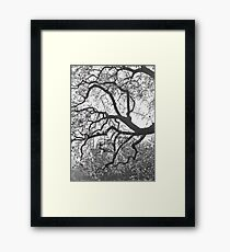 Blossoms In The Mist Framed Print