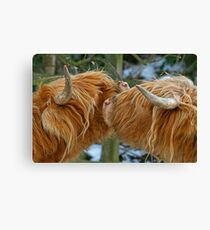 Kissing Cows Canvas Print