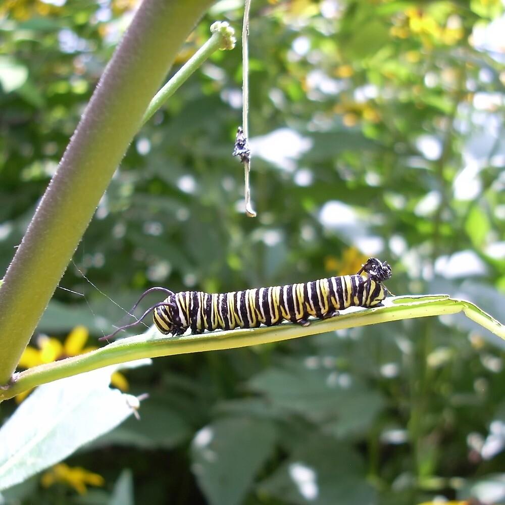 Another Caterpillar, Cox, Dayton, 2012 by Jason Franklin