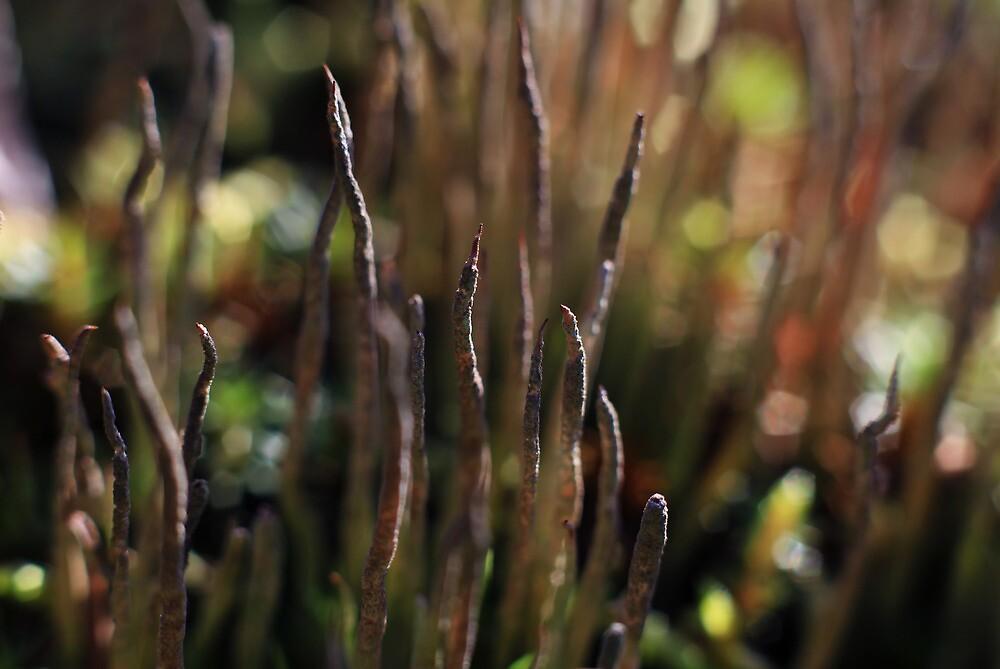 Mossy Fingers by mcornelius
