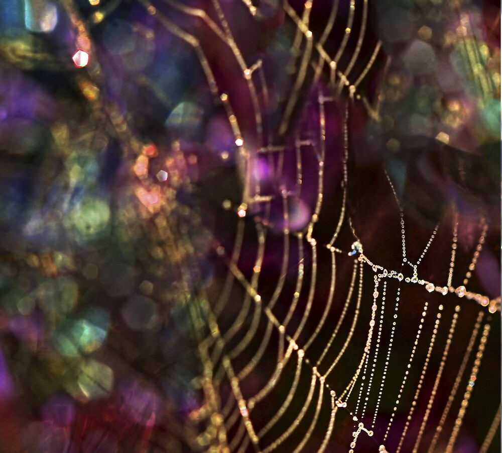 Magic Web by mcornelius