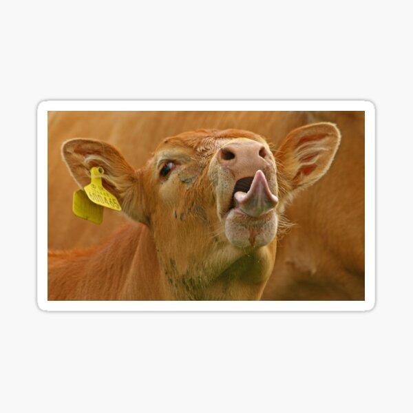 Cheeky Cow! Sticker