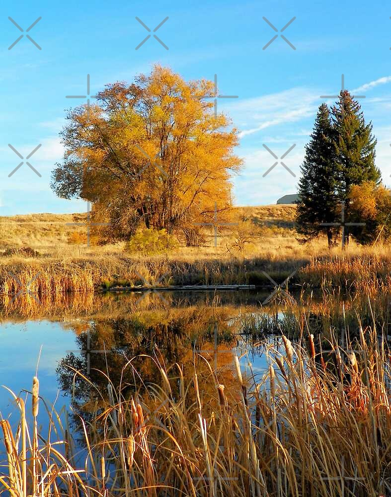 A Reflection of Fall by Betty  Town Duncan