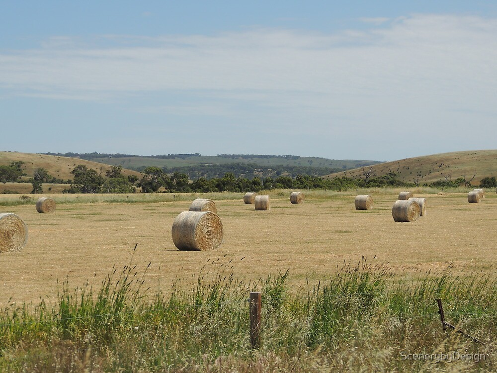 Hay At Victor by ScenerybyDesign