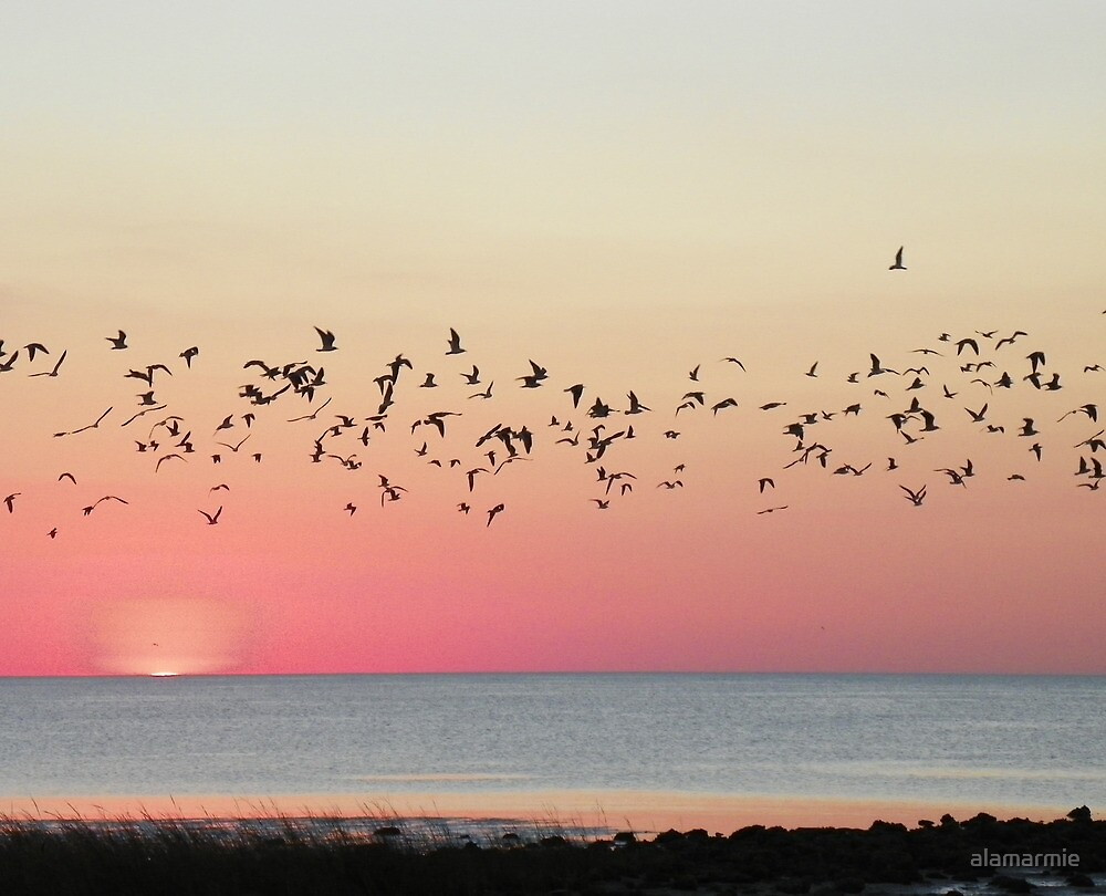 Flight of Sunset by alamarmie