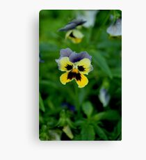 Heartsease Canvas Print