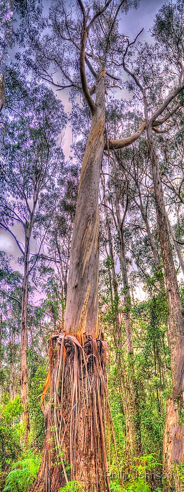 Tall Timber ( Vertical Pano) - Mount Wilson, NSW Australia - The HDR Experience by Philip Johnson