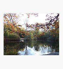 A Berlin morning Photographic Print