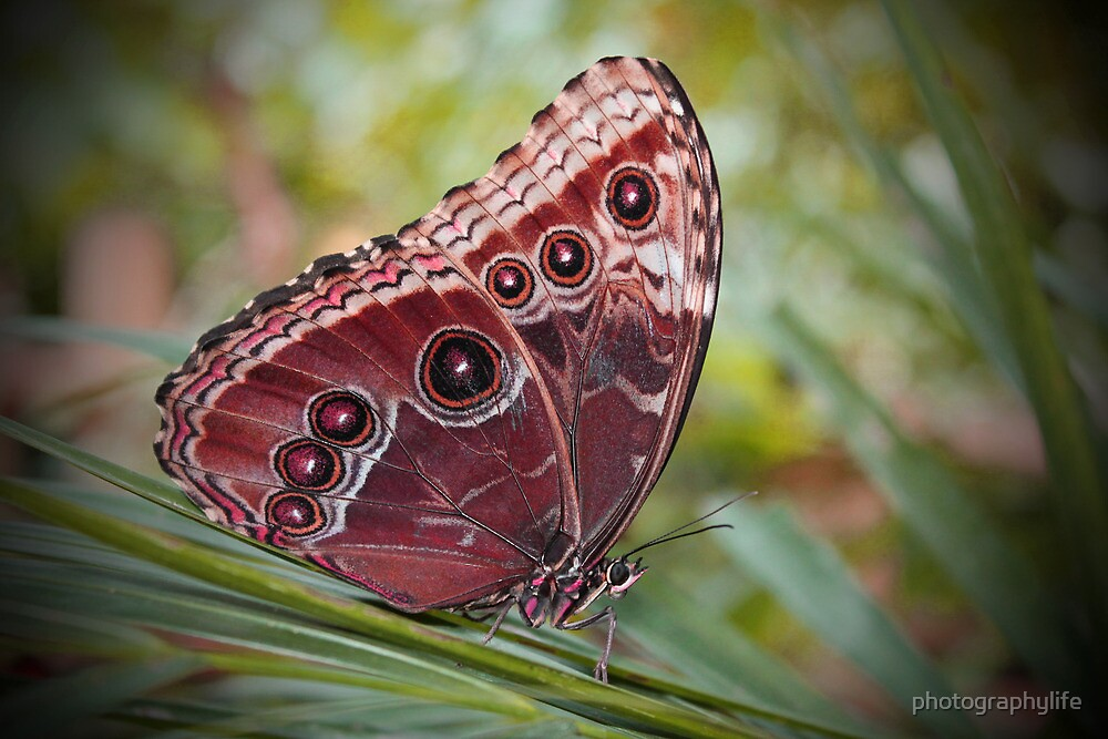Butterfly.. by photographylife