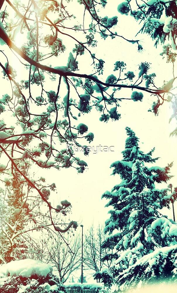Winter Dream by Kuzeytac