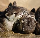 Otters by Nigel Bangert
