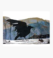 Something About Birds: Crow with White Feather Photographic Print