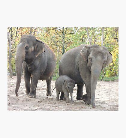 Elephant Family Photographic Print