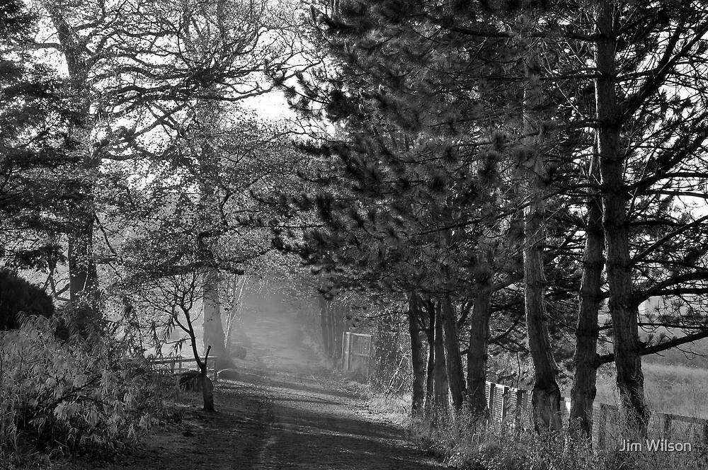 Morning Light by Jim Wilson
