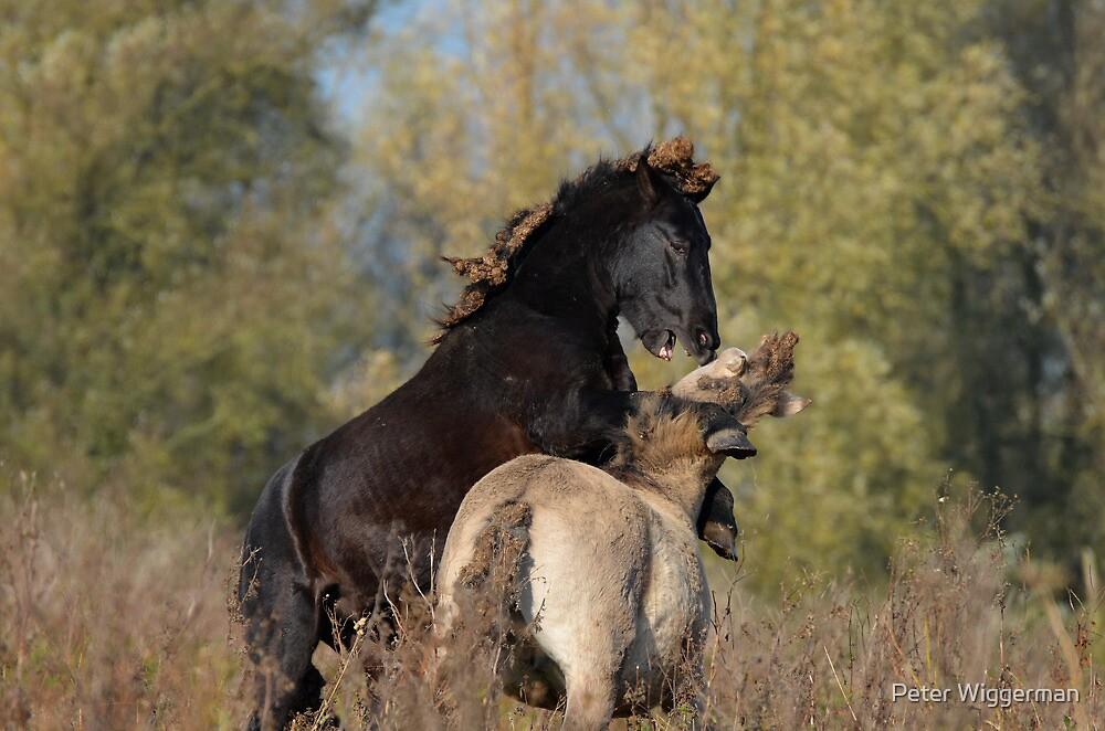 """Wild"" horses by Peter Wiggerman"