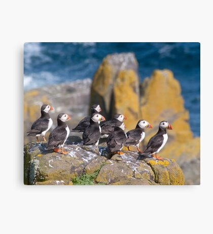 Puffins on cliff ~ Isle of May Canvas Print