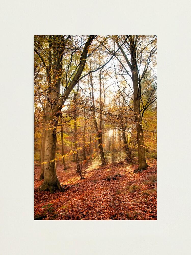 Alternate view of Trees Photographic Print
