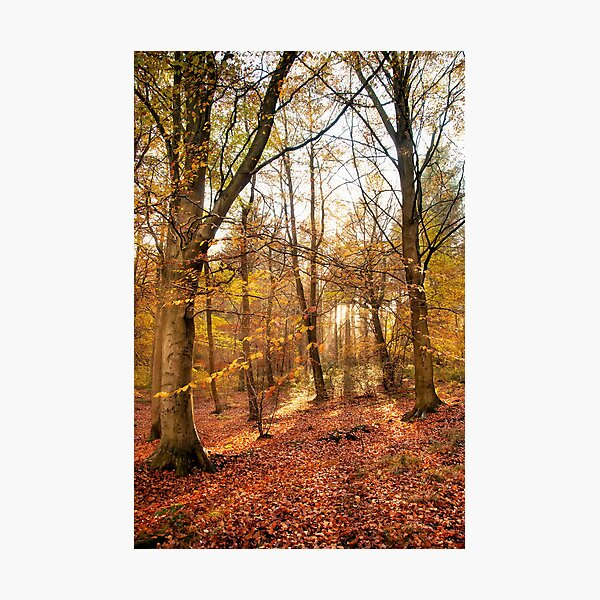Trees Photographic Print