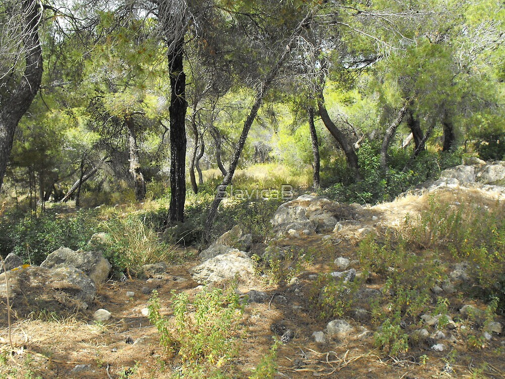 Greek forest by SlavicaB