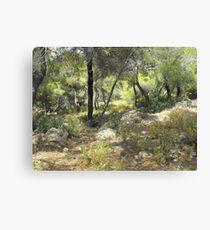 Greek forest Canvas Print