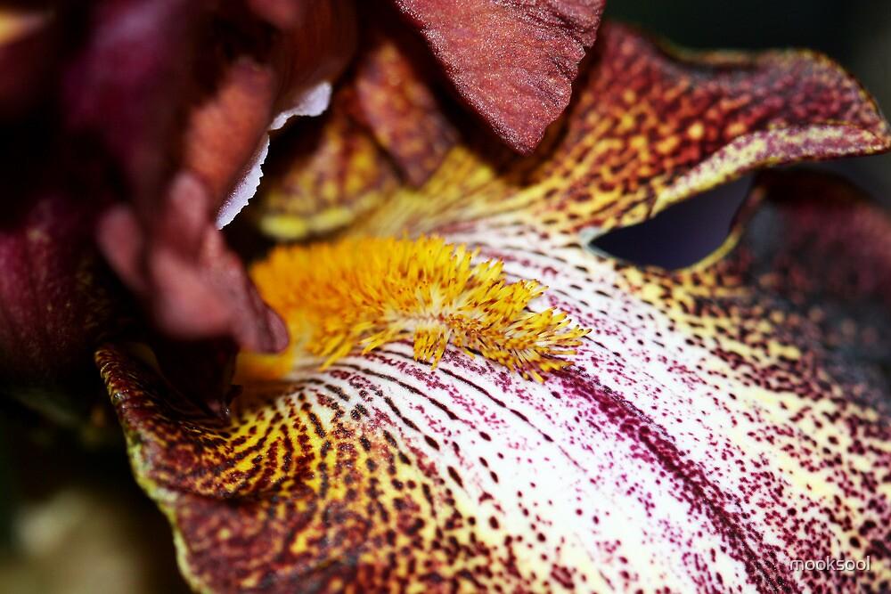 Orchid macro side by mooksool