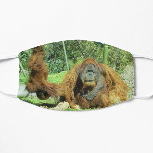 Sumatran Orangutans Satu and Aisha at the San Diego Zoo Mask