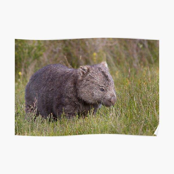 Common Wombat Poster