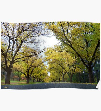 Worms' Eye View of Autumn Poster