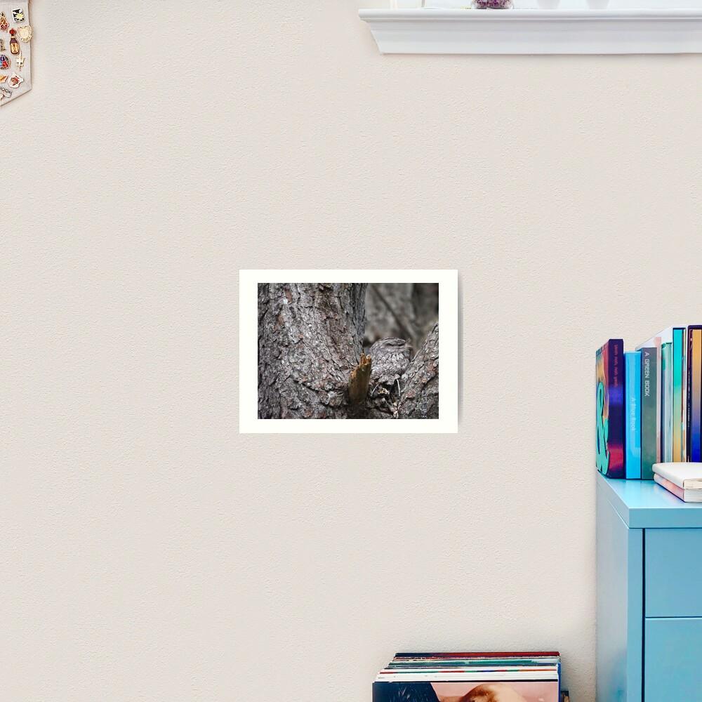Tawny Frogmouth Nesting Art Print
