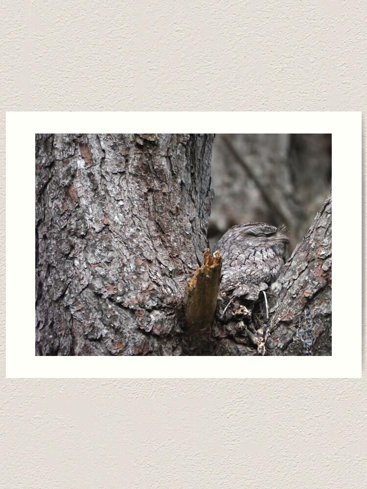Alternate view of Tawny Frogmouth Nesting Art Print