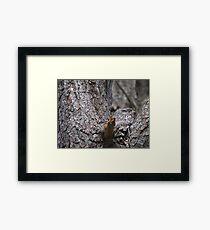 Tawny Frogmouth Nesting Framed Print