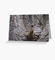 Tawny Frogmouth Nesting Greeting Card