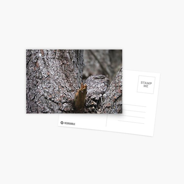 Tawny Frogmouth Nesting Postcard