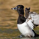 Ring-neck a flappin by Bryan  Keil