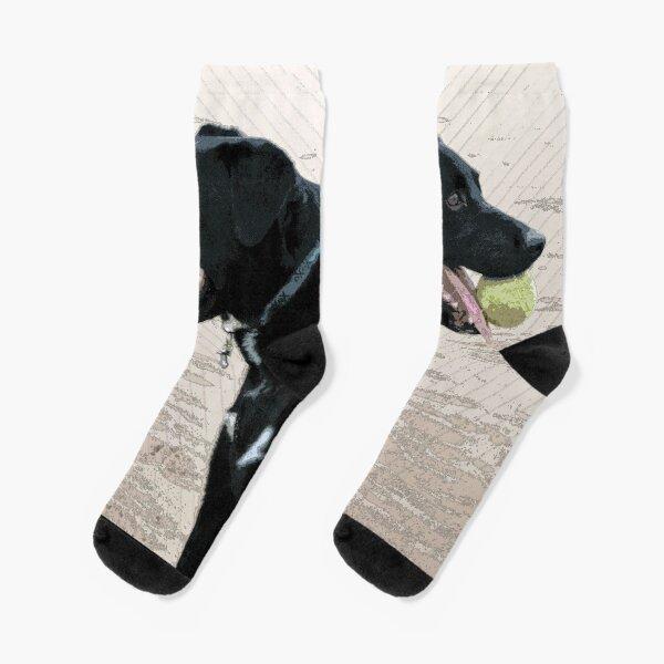 Black Labrador on Beach with a Tennis Ball Socks