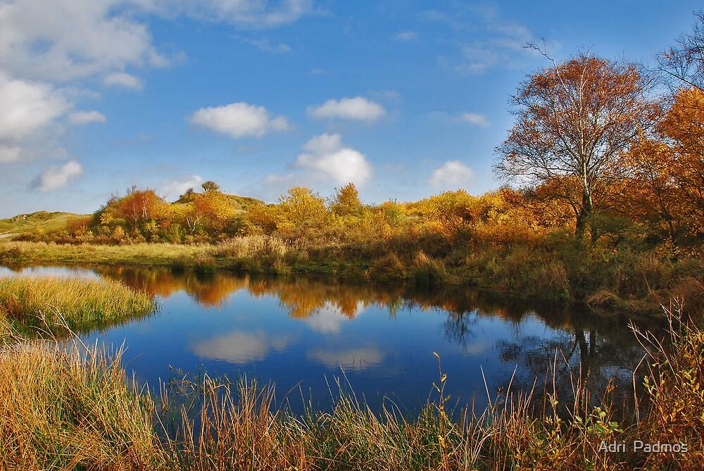 Autumn in Het Zeepe 2 by Adri  Padmos