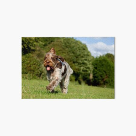 Running in Summer Spinone Art Board Print